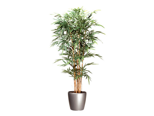 Plante artificielle d 39 int rieur bambou pot contact for Plante interieur bambou