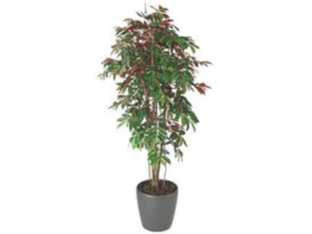 Plante artificielle d 39 int rieur capensia pot contact - Pot mural pour plante interieur ...