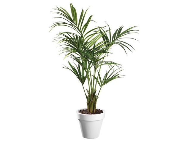 Plante artificielle d 39 int rieur kentia pot contact - Plante carnivore d interieur ...