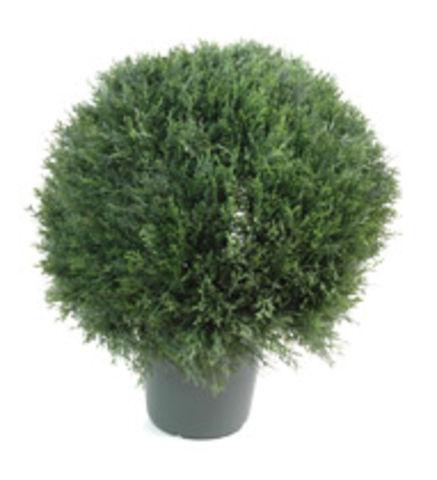 Plante d 39 ext rieur mini cypr s en boule contact maxiburo for Plante arbuste exterieur