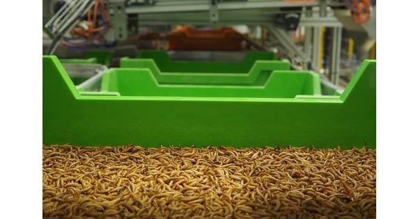 Avec sa ferme de scarabées, Ynsect dévoile ses ambitions