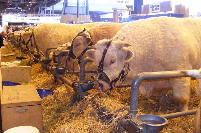 Quoi de neuf cette semaine l 39 agriculture paris le - Ou se trouve le salon de l agriculture ...