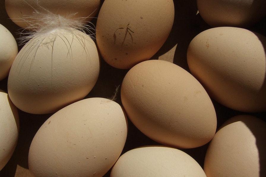 Les ventes d'œufs bio et de plein air explosent