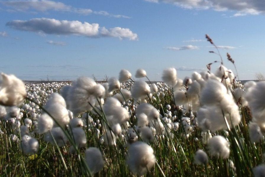 Bayer veut céder des activités d'agrochimie à BASF