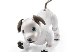 Sony ressuscite son robot-chien Aibo par l'intelligence artificielle et le cloud