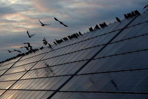 Solaire. EDF va investir 25 milliards d'euros