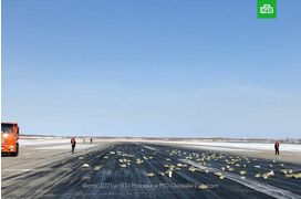 Un avion largue accidentellement des lingots d'or en Russie