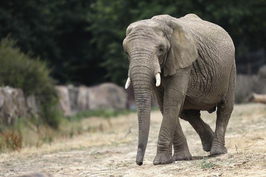Les déchets organiques du zoo de Thoiry sont désormais valorisés