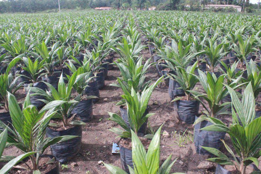 L'huile de palme de Total n'est qu'un (encombrant) prétexte pour la FNSEA