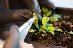 Plantes bioniques