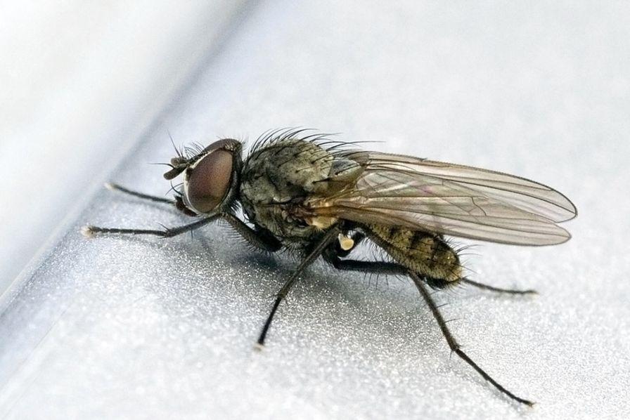 Comgraf va transformer des larves de mouche en chitine à Lacq