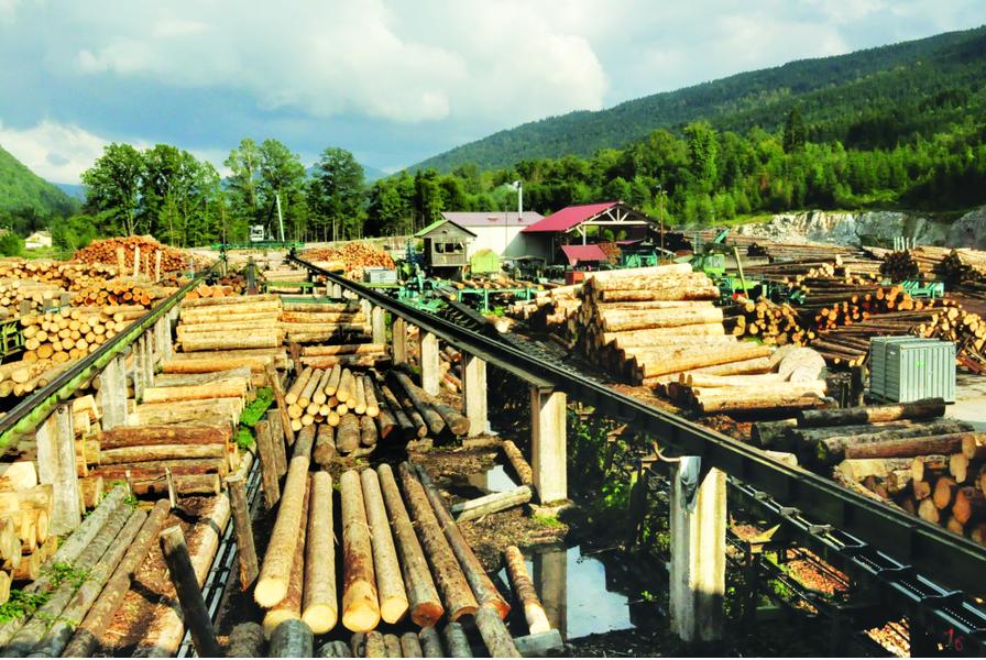 Dans le Grand-Est, la filière bois peut mieux faire