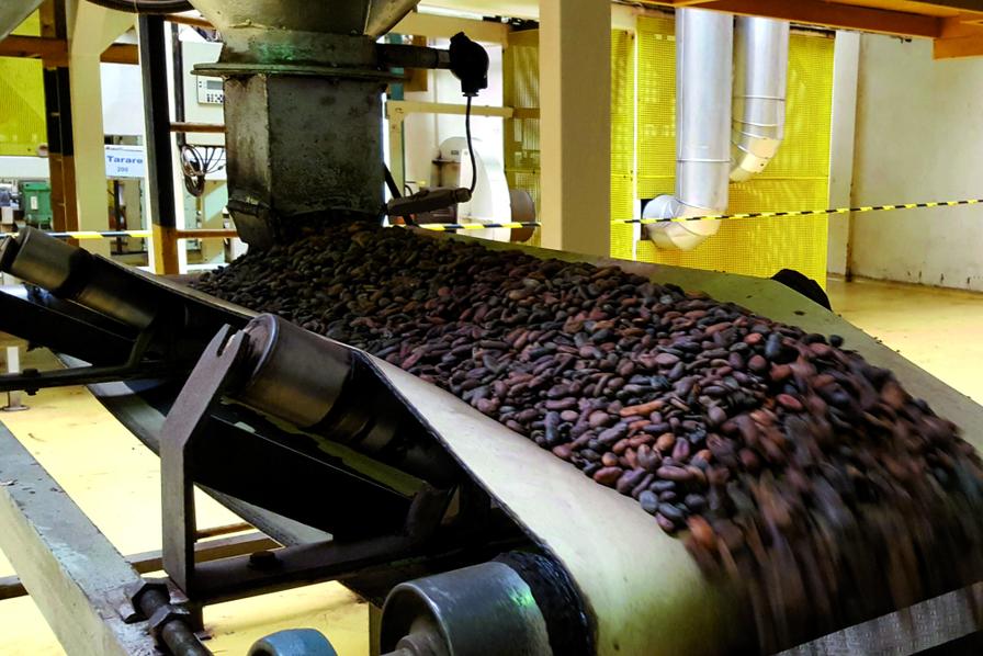 Le cacao ivoirien fait saliver les industriels - Côte d'Ivoire