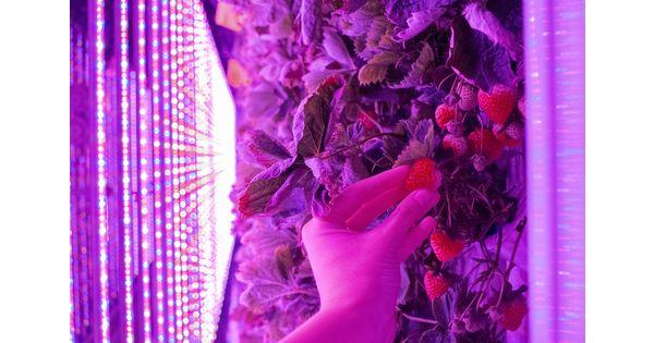 Avec ses fermes-conteneurs, Agricool propose une production écologique et locale en ville - L'Usine Agro