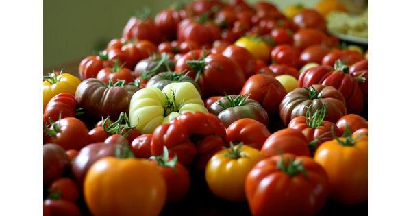 Qu'est ce que le Tobrfv, le virus de la tomate, qui menace la production française ? - L'Usine Agro