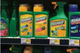 "[Glyphosate] Le ""ghostwriting"" au cœur du nouveau volet des ""Monsanto Papers"""